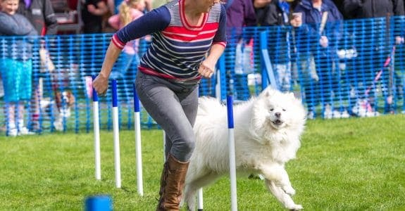 dog show 3